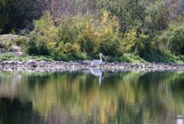Woodlands Fishing Resort